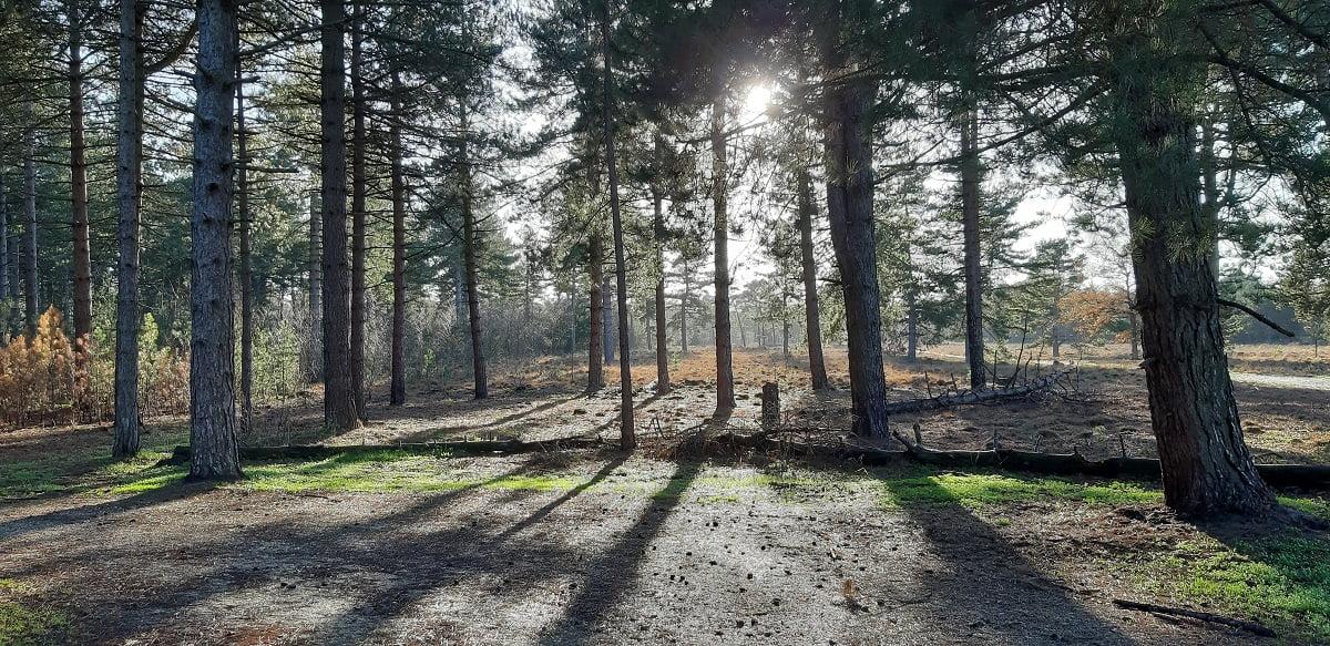 Zonlicht door bomen Maasduinen