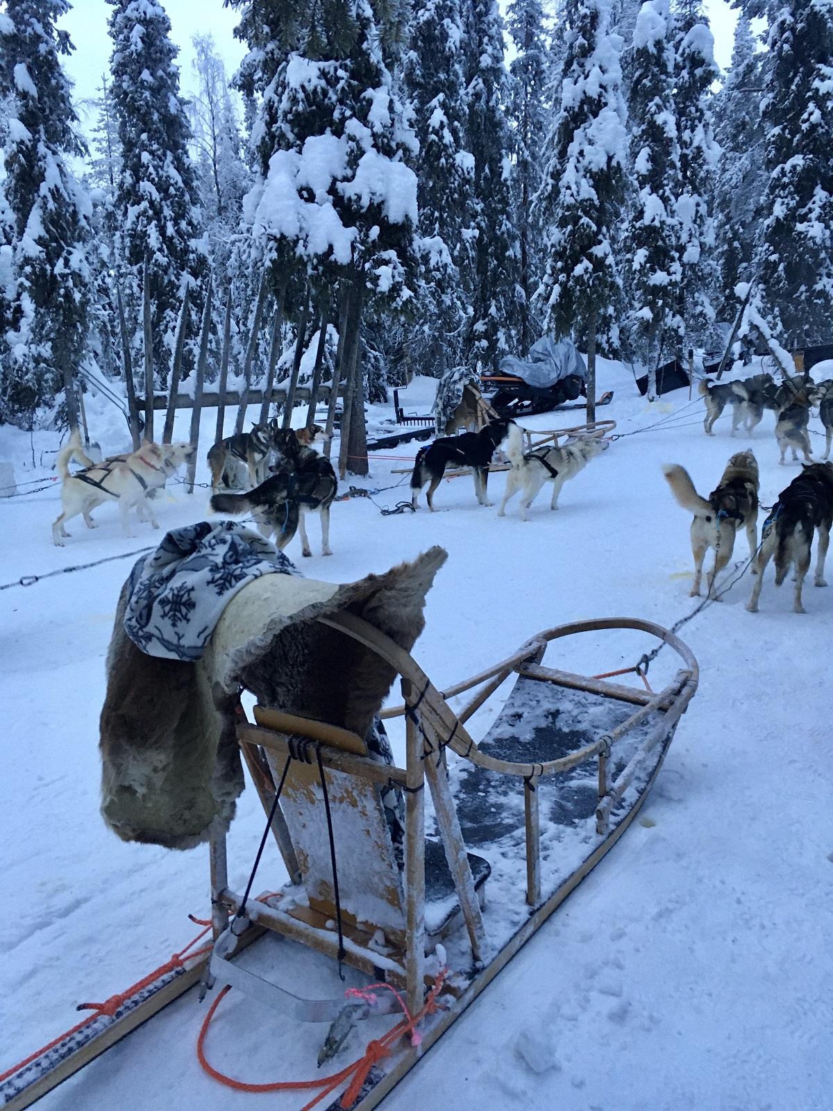 Husky's hondensledetocht in Lapland
