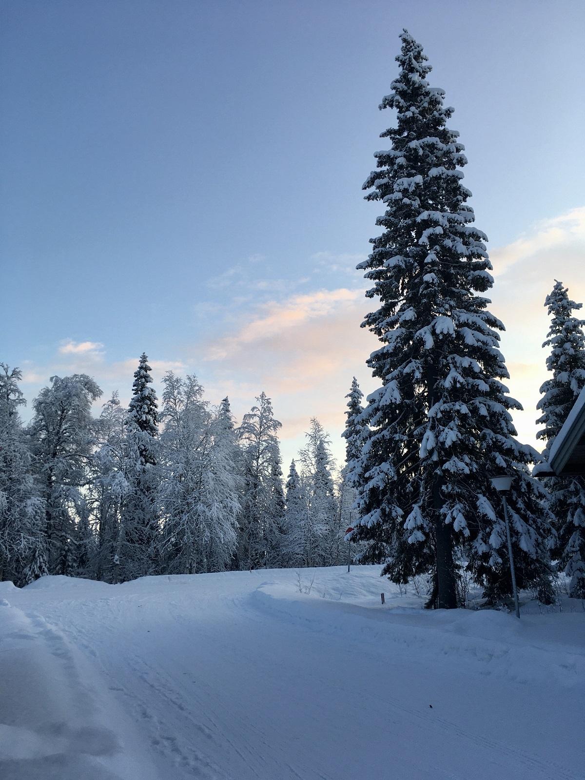 Winters landschap Lapland bomen